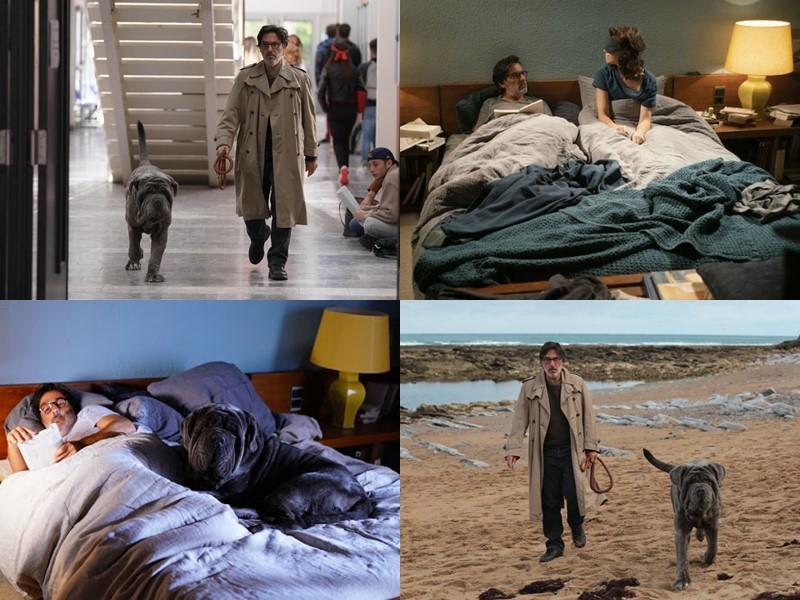 Кинопремьеры-2020: фильмы февраля - «Моя собака Идиот»